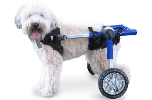 Walkin' Wheels Dog Wheelchair - For Medium Dogs