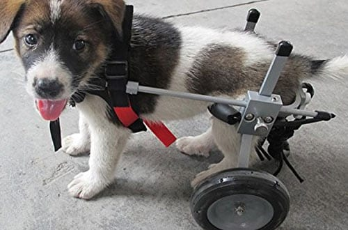 Adjustable Dog Pet Wheelchair