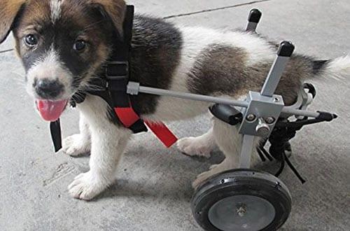Adjustable Dog Pet Wheelchair