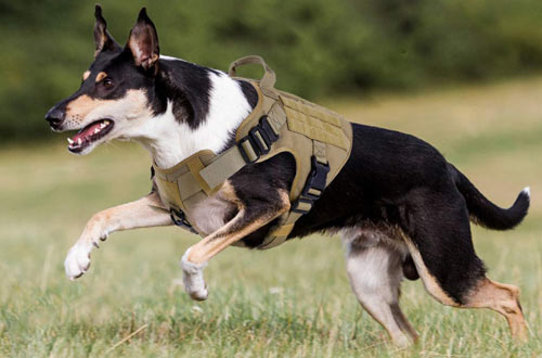 Rabbitgoo Large Military Dog Harness Vest with Handle