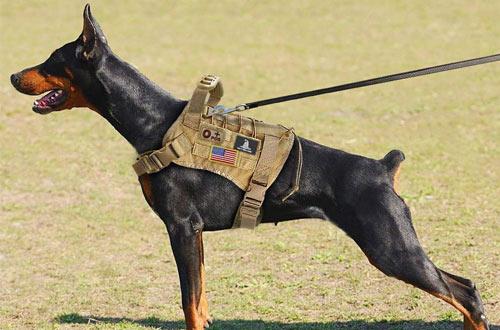 EJGMedium and LargeTactical Dog Harness Vest